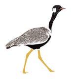 Dubbel gestreepte courser vogel royalty-vrije illustratie