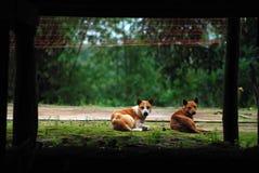 Dubbel hund royaltyfria bilder