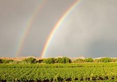 Dubbel regnbåge över vingård Royaltyfri Bild
