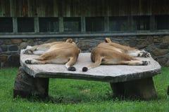 Dubbel in slaap probleem royalty-vrije stock fotografie