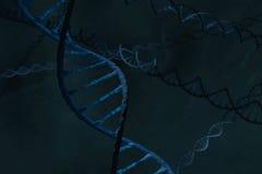 Dubbel spiral för blått DNA i firld av DNA:t Fotografering för Bildbyråer
