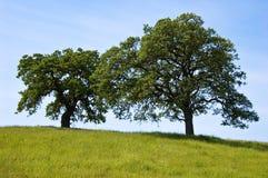 dubbel tree Arkivbilder
