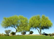 dubbel tree Arkivfoton