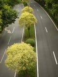 Dubbel vägväg med träd på mitt Royaltyfri Foto