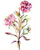 Dubbele bloem Stock Afbeeldingen