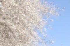 dubbele blootstelling, abstract beeld van kersenboom Royalty-vrije Stock Afbeeldingen