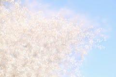 dubbele blootstelling, abstract beeld van kersenboom Royalty-vrije Stock Fotografie