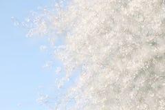 dubbele blootstelling, abstract beeld van kersenboom Stock Foto's