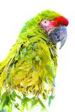 Dubbele blootstelling Foto van een tropische die papegaai met heldergroene bladeren wordt gecombineerd stock foto
