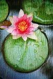 Dubbele blootstelling van bloemenvoorwerpen Royalty-vrije Stock Foto