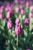 Dubbele blootstelling van bloemenvoorwerpen Stock Fotografie