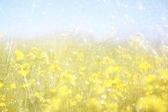 Dubbele blootstelling van de bloei van het bloemgebied, die tot abstracte en dromerige foto leiden Royalty-vrije Stock Foto's