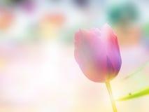 Dubbele Blootstelling van Tulip And Bloom Field Stock Afbeelding