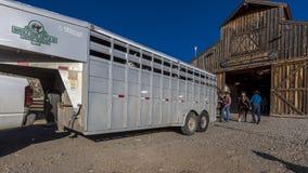 Dubbele Shoe Cattle Company, Paardaanhangwagen en Honderdjarige Boerderij B Stock Afbeeldingen