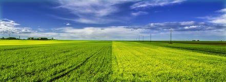 Dubbelt grönt fält Royaltyfri Fotografi