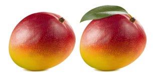 Dubbelt helt rött mangoblad på vit bakgrund Royaltyfri Foto