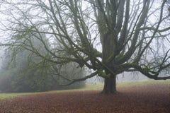 Dubbelt kastanjebrunt träd för häst i nedgången Arkivfoton