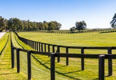 Dubbelt staket på hästlantgården royaltyfria foton