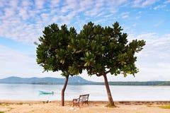 Dubbelt träd med stolsjösidan för ett avslappnande stag Arkivbild
