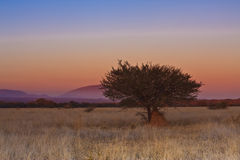 Dube Nature Reserve Stock Images