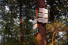Dubicky,捷克共和国- 2017年7月08日:在树的旅游标志在sommer日落的捷克中央山 库存图片