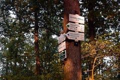 Dubicky, República Checa - 8 de julio de 2017: muestras turísticas en árbol en montañas centrales checas en puesta del sol del so Imagen de archivo