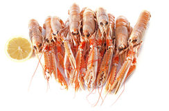 Dublin Bay Prawn Royalty Free Stock Images