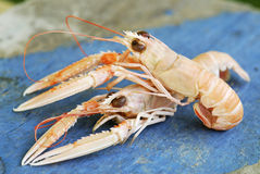 Dublin Bay prawns Royalty Free Stock Image