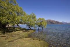 Dublin Bay sjö Wanaka, NZ arkivfoto