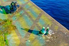 Dublin-förälskelse fåglar royaltyfri fotografi
