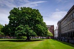 Dublin Ireland - Juli 1, 2018: majestueuze groene boom bij het Parlement royalty-vrije stock fotografie