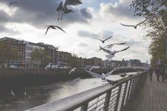 DUBLIN - JANUARI 12: Liffey flod på Januari 12, 2015, Dublin Royaltyfri Foto