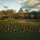 Dublin Park met gele bloemen royalty-vrije stock foto's