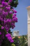 Dubrovnik, MinÄ  eta wierza z kwitnącym bougainvillea Obraz Royalty Free