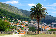 Dubrovnik old town, Croatia. Dubrovnik old town, view from the park, Croatia Royalty Free Stock Photo