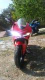 Ducati Panigale 1299 e ZX10 fotos de stock
