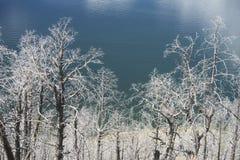 Duchów drzewa Yellowstone obok błękitnego jeziora Zdjęcia Royalty Free