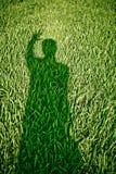 Ducha cień na trawie Zdjęcie Stock