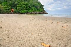 Ducha krab lub piaska krab grzebiemy na plaży fotografia royalty free