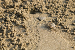 Ducha krab robi piasek piłkom na plaży Mały kraba głębienie ho Obrazy Royalty Free