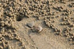 Ducha krab robi piasek piłkom na plaży Mały kraba głębienie ho fotografia stock