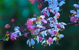 Ducha rosada Foto de archivo libre de regalías