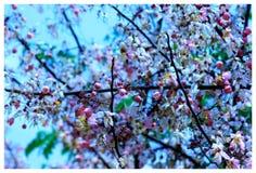 Ducha rosada Imagen de archivo