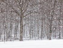 Duchas de nieve de abril Fotografía de archivo libre de regalías