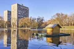 Duck дом на пруде в городе Стоковые Изображения RF