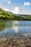 Duck на пруде на предпосылке гор Стоковая Фотография