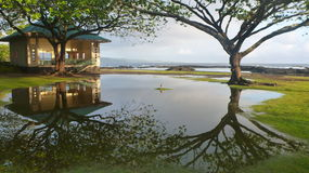 Duck отражение острова в неподвижность Стоковые Изображения RF