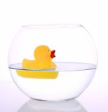 Duck. A small and yellow duck on a water bowl Royalty Free Stock Photos