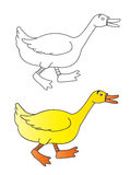Duck Royalty Free Stock Photography