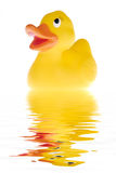 The duck. Yellow plastic duck with water. Picture was taken in a studio stock image